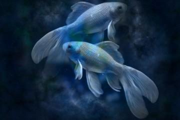 Horoskop: RIBE -- karakteristike