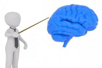 Dualitet svesti - Desna i leva polovina mozga