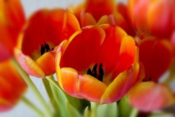 Poklonite cveće prema horoskopskom znaku