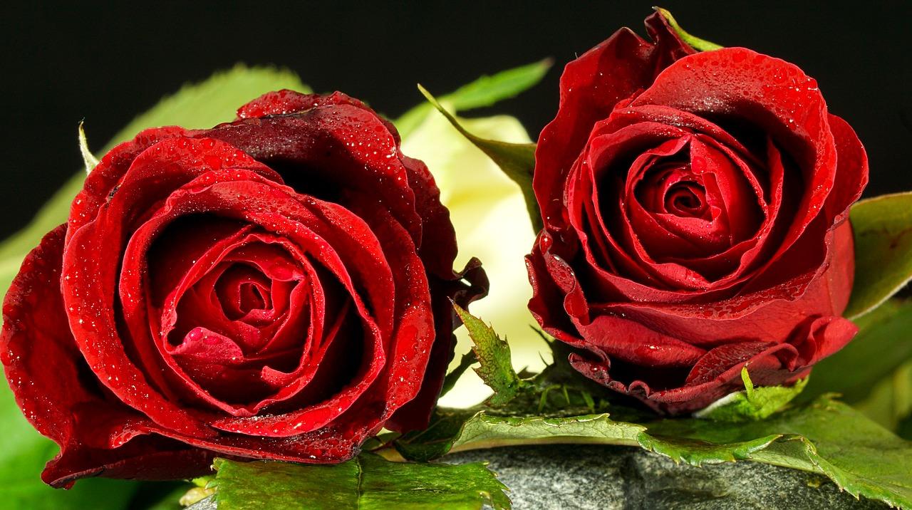 horoskop cveće